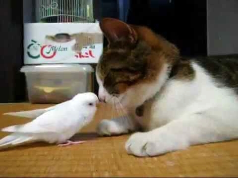 Bird Wakes His Best Friend... A Cat!
