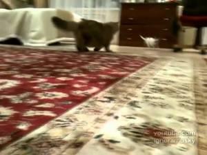 VIDEO: Cute Annoying Dog
