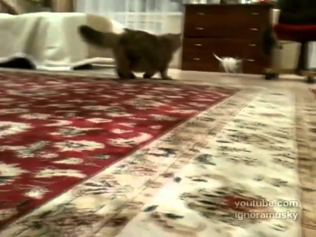 Cute Annoying Dog