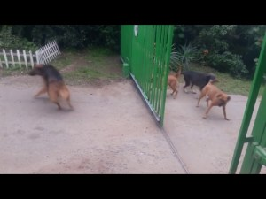 Dogs Don't Really Want To Fight