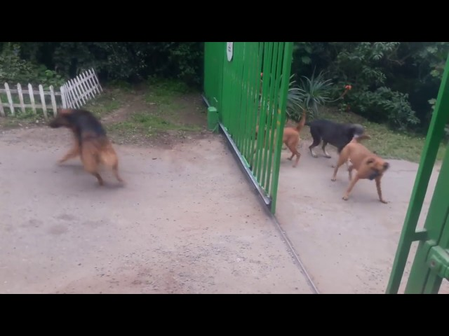 (VIDEO) Dogs Don't Really Want To Fight