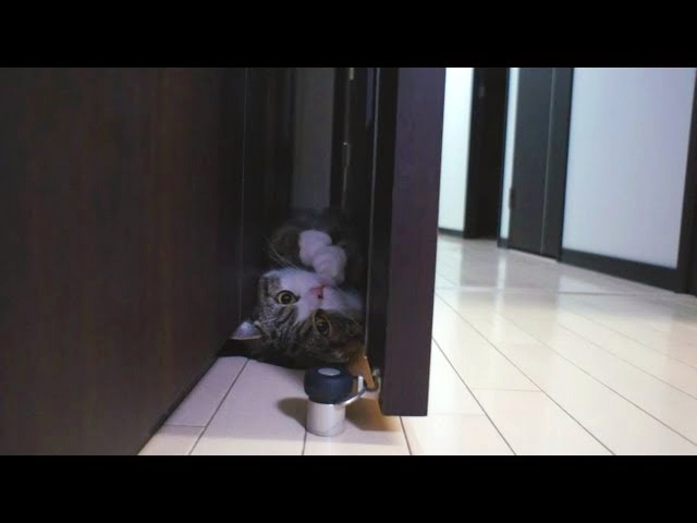Funny Cat Doing A Somersault