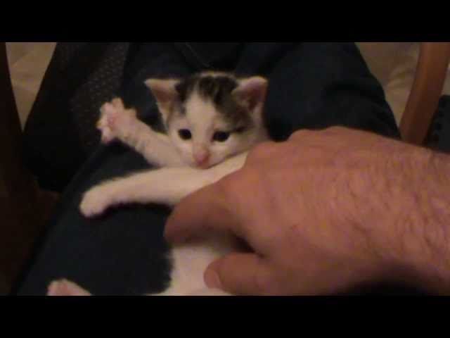 Cute Little Kitten Playing Invisible Harp
