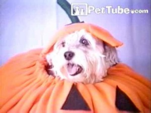 Dress Up Your Dog For Halloween video