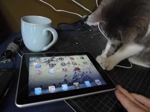 Curious Cat Investigates An ipad