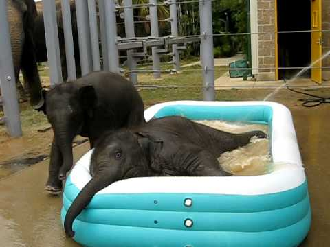 Two Cute Baby Elephants in a Pool