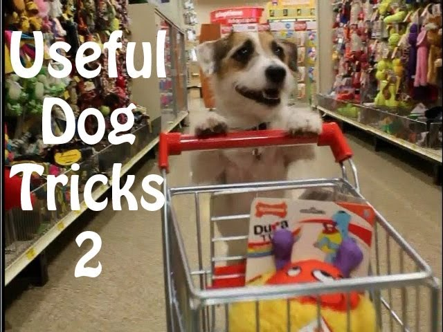 Useful Dog Tricks