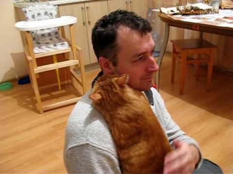 Cat Loves Dad
