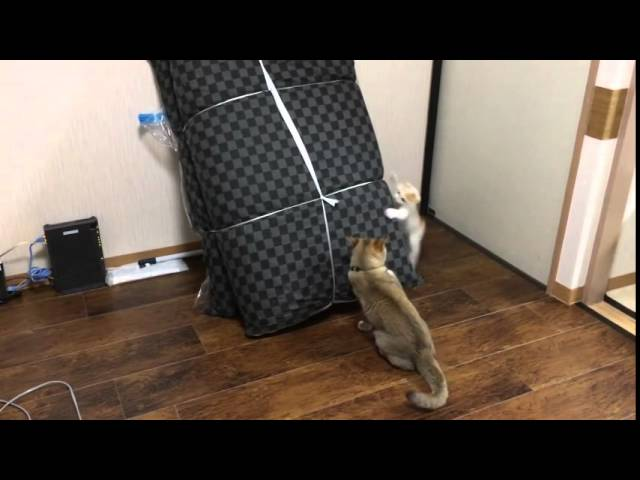 Funny Cats Playing Tag