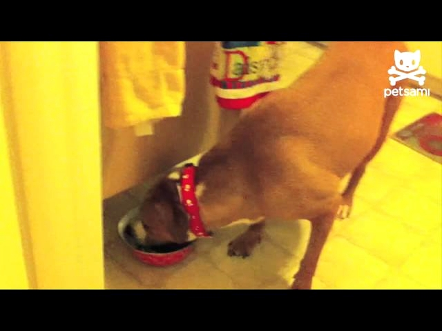 Cute Puppy Steals Food When Dog Isn't Looking
