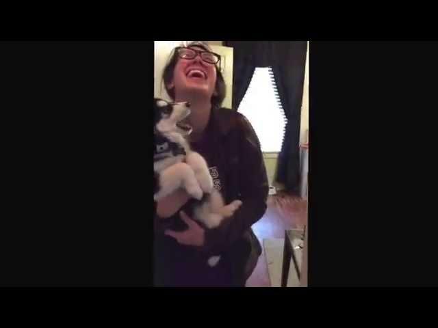 Funny Talking Husky Puppy video