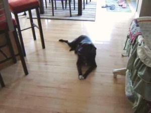 Dave The Dog Goes Crazy