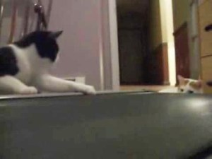 Video Cats Try to Understand Treadmill