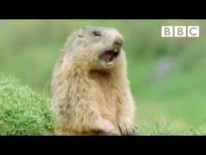 "Funny Talking Animals: ""Alan"" video"