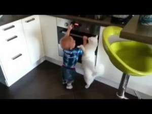 Cat Protects Toddler From Touching Stove