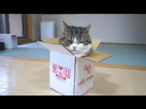 A Box and Maru the Funny Cat video