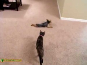Funny Dog Uses Towel To Dry Himself video