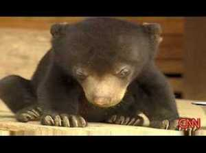 Sleepy Baby Bear Can't Stay Awake