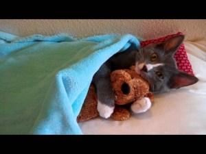 Cute Cat Hugs Her Teddy Bear video