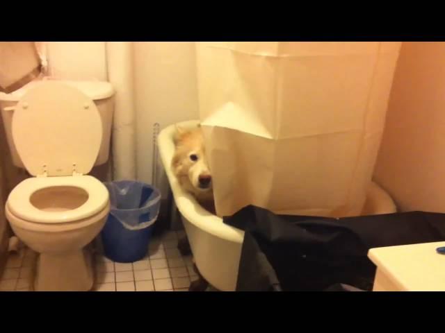 Smart Dog Hides in Bathtub During Tornado Watch in NYC