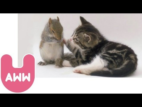 Cat Adopts Baby Squirrels