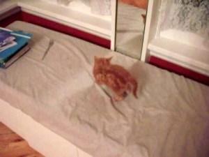 Adorable Kitten Freaks Himself Out