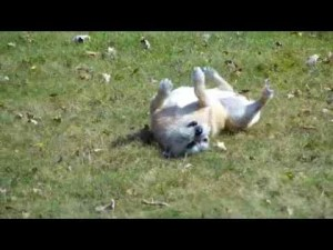 She's A Lady! Funny dog video