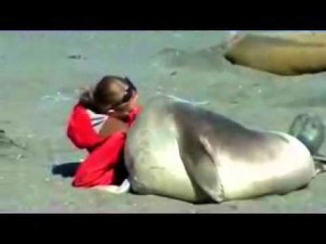 (VIDEO) How to Cuddle with an Elephant Seal