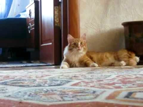 Funny Scaredy Cat