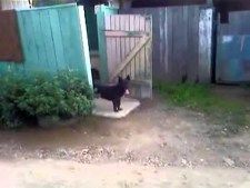 (VIDEO) Funny Doorman Dog