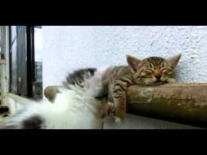 Kitten Tries Waking Up His Friend