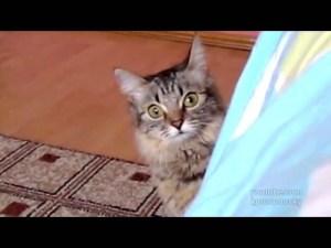 (VIDEO) Ultra Fast Ninja Cat