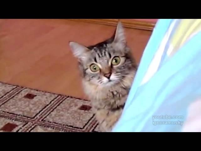 Ultra Fast Ninja Cat