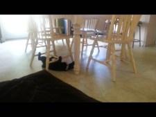 (VIDEO) Cute Crazy Cat