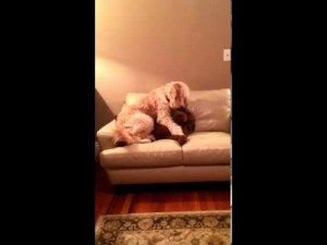 (VIDEO) Dog Comforts Pal Having Bad Dream