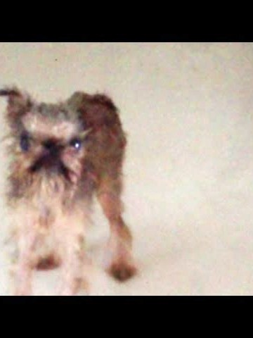 (VIDEO) Dog's Funny Reaction After A Bath