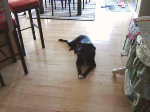 Dog Goes Crazy Over Song