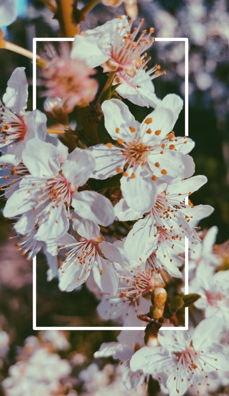 Aesthetic Flower Wallpaper Posted By Zoey Tremblay