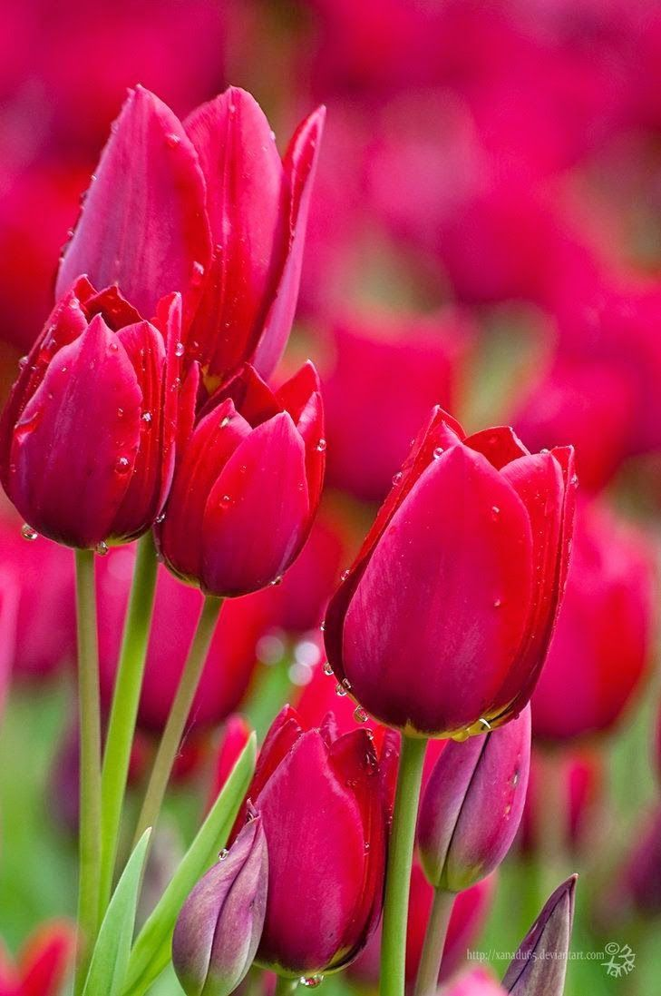 Beautiful Flower Images Wallpapers Posted By John Sellers