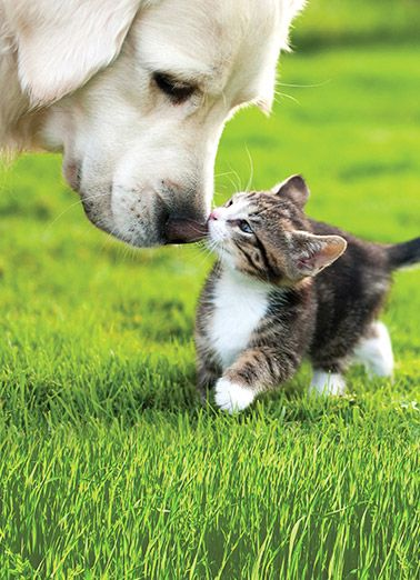 Cute Dog And Cat Images Posted By Ethan Anderson