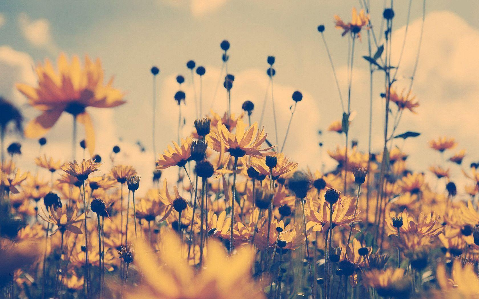 Fall Flowers Backgrounds Posted By Zoey Cunningham
