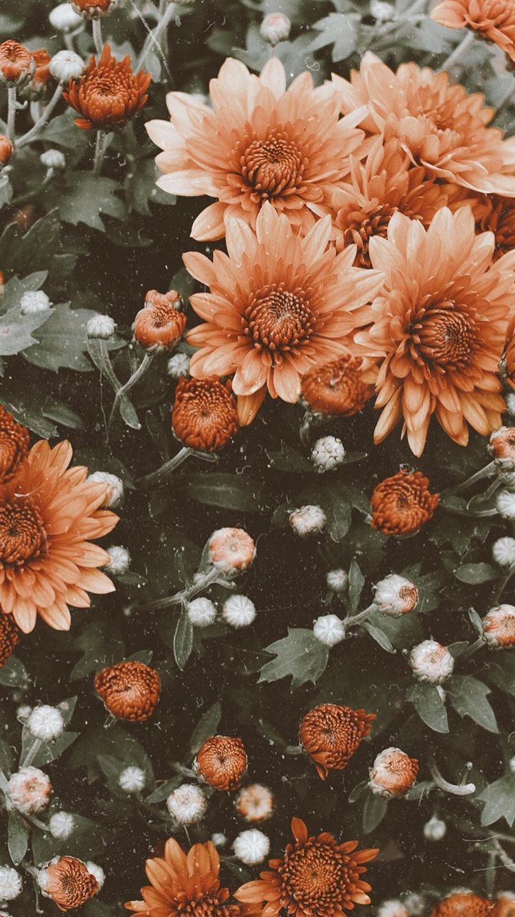 Flower Aesthetic Wallpaper Posted By Zoey Thompson
