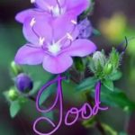 Good Morning Flower Images Free Download Posted By Samantha Anderson