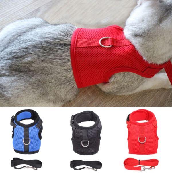 Verschillende kleuren van het kattentuigje met riem