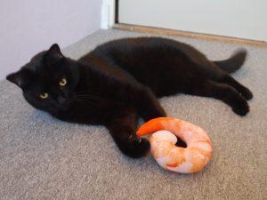 Kattenspeelgoed met geluid en kattenkruid