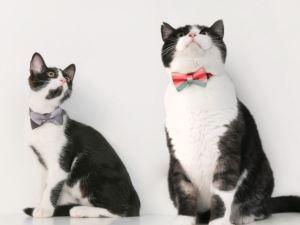 Veilige Kattenhalsband met Strik