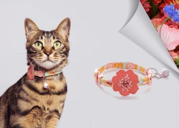 Kat draagt kattenhalsband met rode bloem