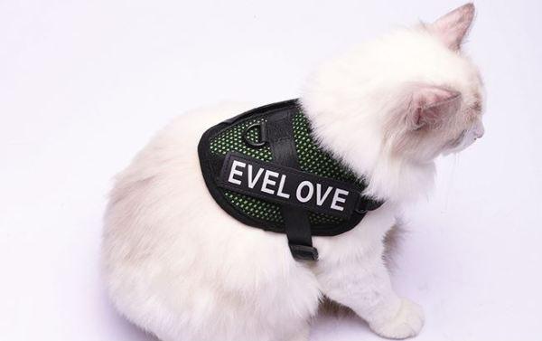 Kattenharnas met Leiband groen