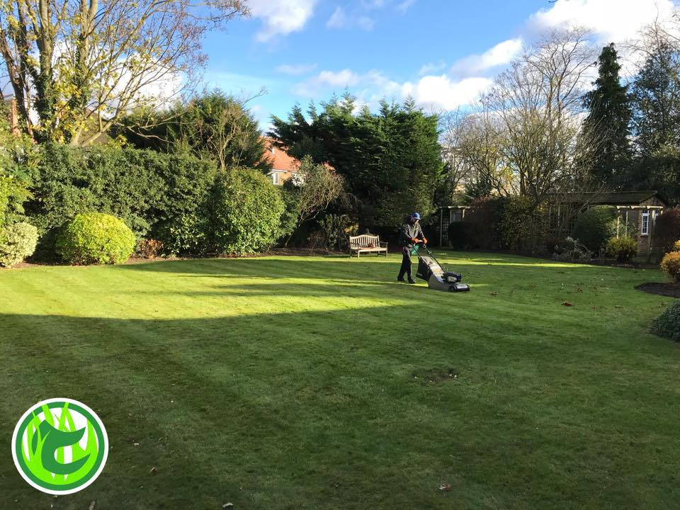 Chiswick gardening services