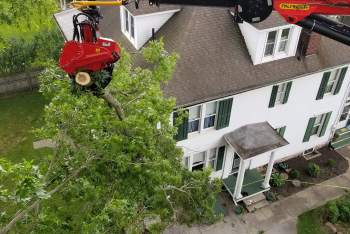 tree removal state college